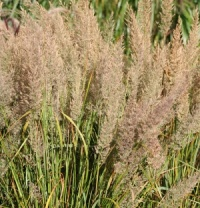 6 Grasses for the Border