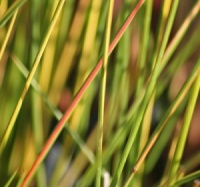 6 Grasses for Damp or Bog Garden