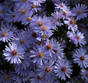 New names for some Asters